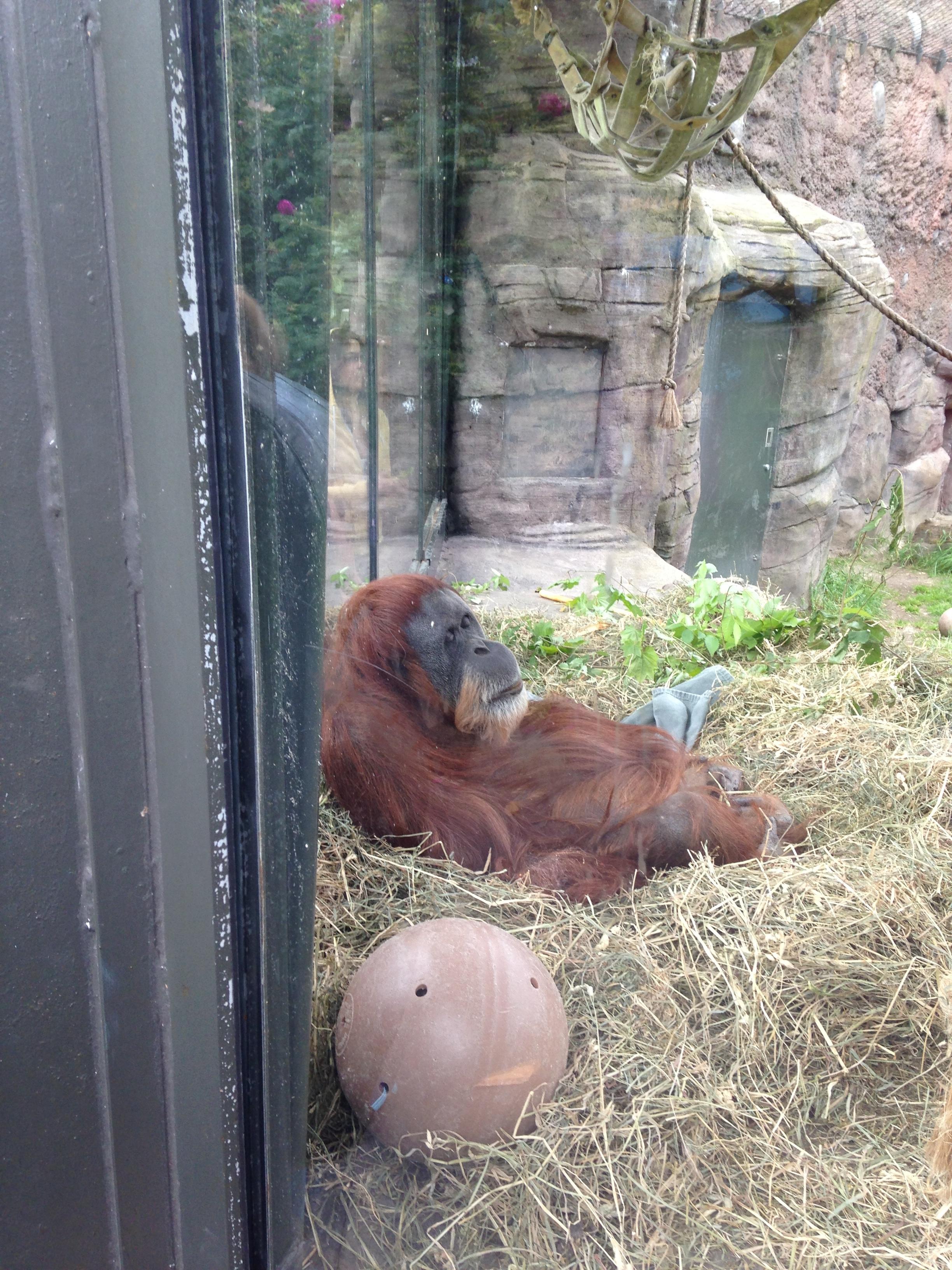 Oregon Zoo: Day Trip To The Oregon Zoo