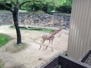 Oregon Zoo 2014 Giraffe and Gazelle and Condor